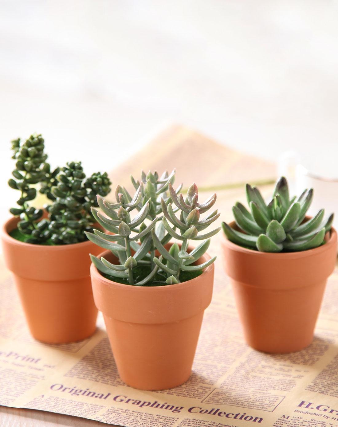 仿真沙漠植物盆栽三件组合