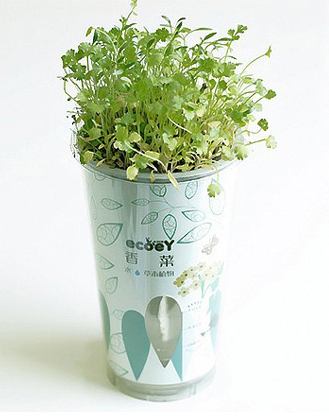 (香菜)有机蔬菜种植