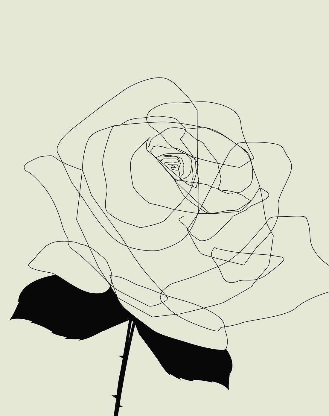 玫瑰花画 玫瑰花名画 玫瑰花简笔画 玫瑰花铅笔画