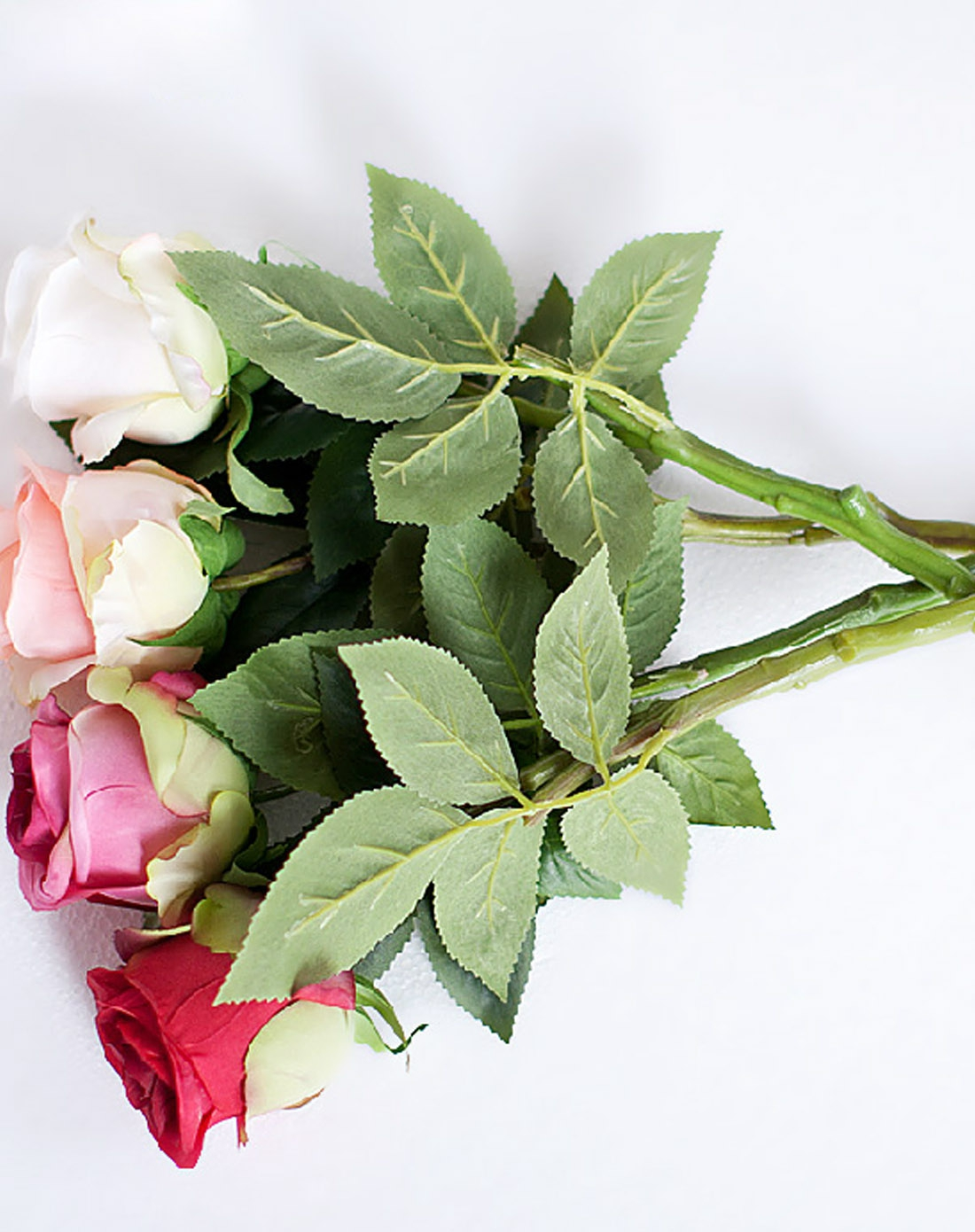 彩铅画 玫瑰花 背景展示